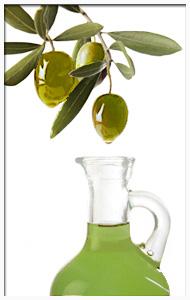 frueh-olivenoel-beschreibung